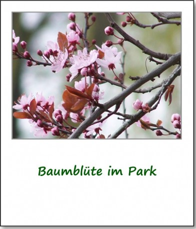 2007-fruehlingsimpressionen-baumbluete