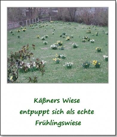 2007-fruehlingsimpressionen-fruehlingswiese