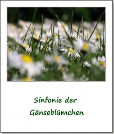 2007-fruehlingsimpressionen-gaensebluemchen