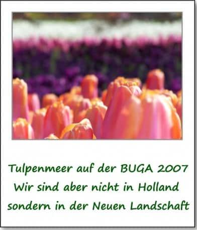 2007-fruehlingsimpressionen-tulpenmeer