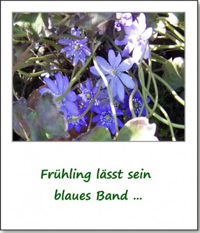 2008-fruehlingserwachen-leberbluemchen