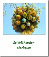 2009-eierbaum