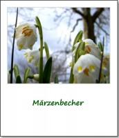 2009-fruehlingserwachen