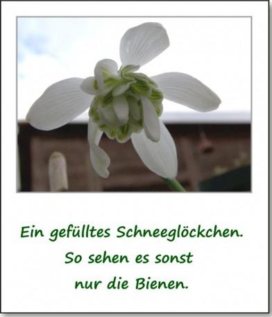 2009-fruehlingserwachen-04