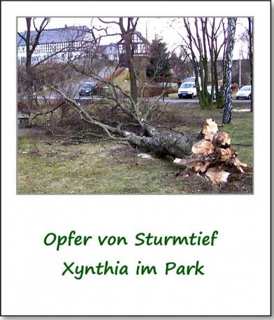 2009-presse-sturmtief-xynthia