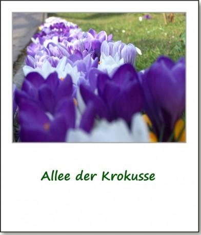 2010-fruehlingserwachen-02