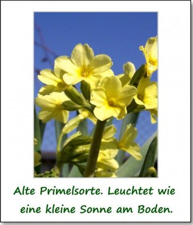 2011-fruehlingserwachen-02