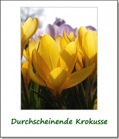 2011-fruehlingserwachen-03