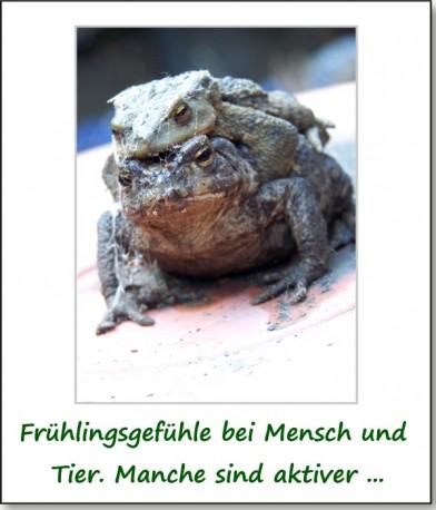 2011-fruehlingserwachen-04