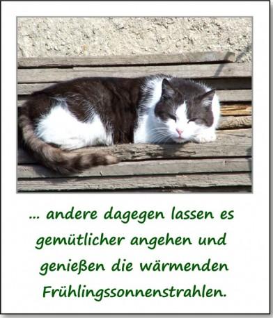 2011-fruehlingserwachen-05