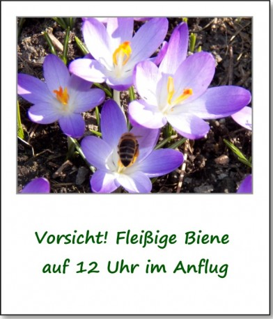 2012-fruehlingserwachen-01