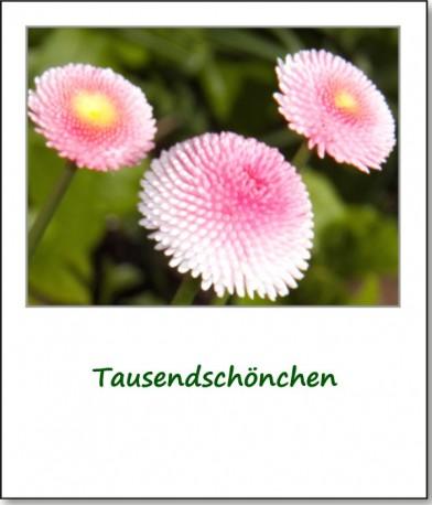2012-fruehlingserwachen-04