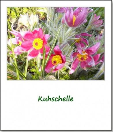2012-fruehlingserwachen-05