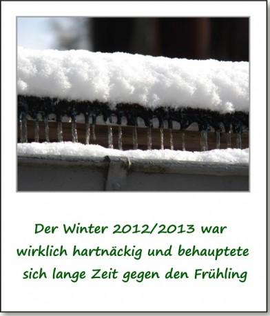 2013-fruehlingserwachen-01