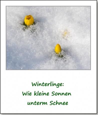 2013-fruehlingserwachen-04