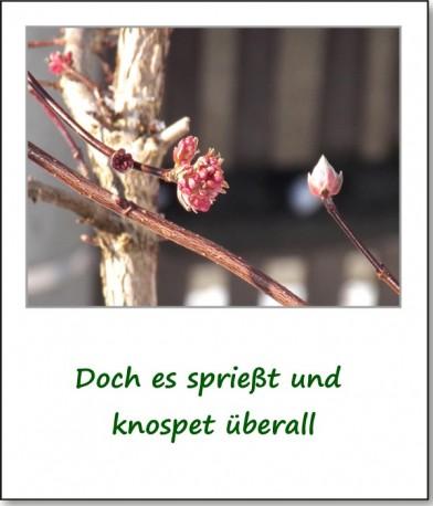 2013-fruehlingserwachen-05