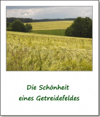 2012-farbspiele-getreidefeld-01