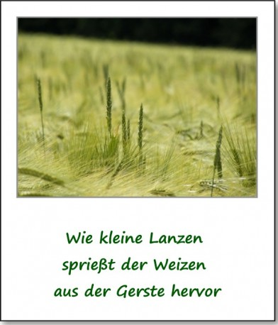 2012-farbspiele-getreidefeld-02
