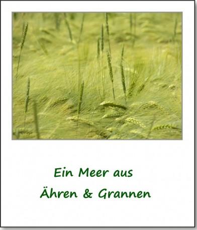 2012-farbspiele-getreidefeld-03