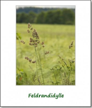 2012-farbspiele-getreidefeld-04
