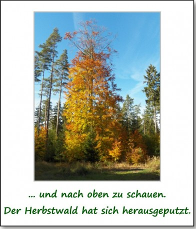 2012-hirschbacher-wald-02
