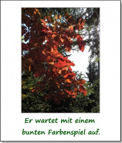 2012-hirschbacher-wald-03
