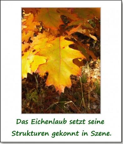 2012-hirschbacher-wald-05