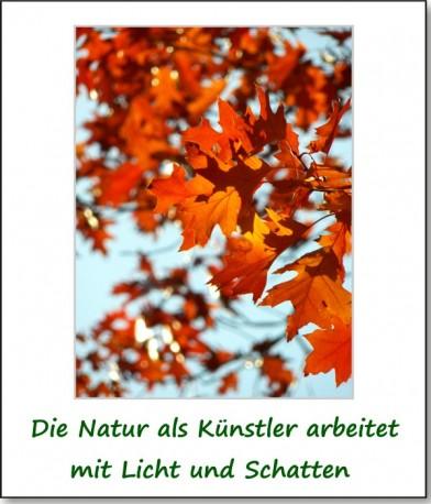2012-hirschbacher-wald-06