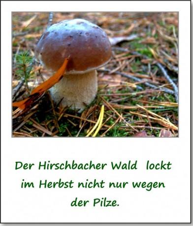 2012-hirschbacher-wald-07