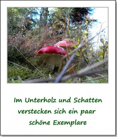 2012-hirschbacher-wald-08
