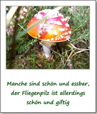 2012-hirschbacher-wald-09