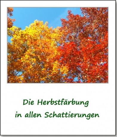2012-hirschbacher-wald-12