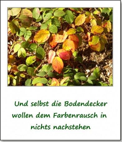 2012-hirschbacher-wald-13