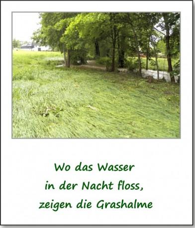 2013-hochwasser-leuba-montag-wiesenstrasse-04