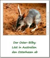 oster-bilby-kaninchennasenbeutler