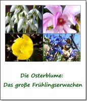 osterblume